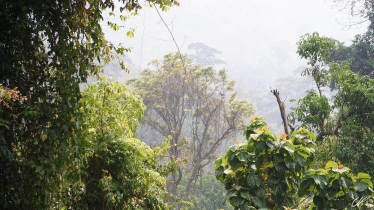 Thailand Chiang Mai Trek